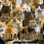 afis pisica 2017