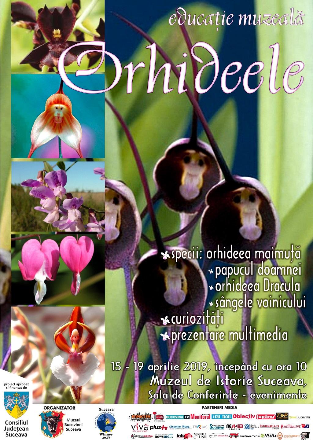 afis orhidee